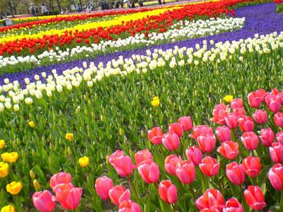 国営木曽三川公園 チューリップ祭