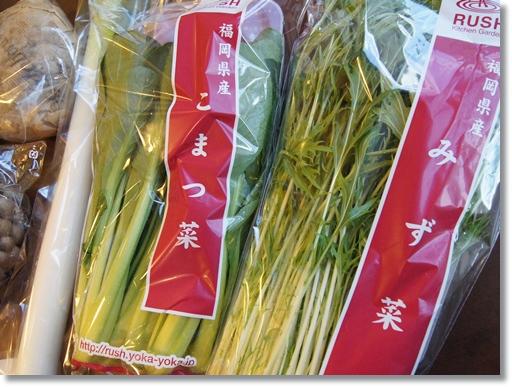 水菜 小松菜