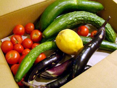 夏野菜のいただきもの