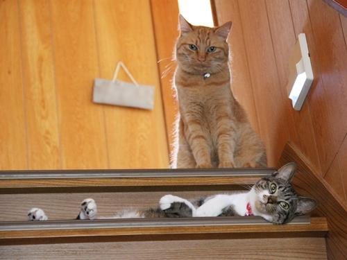 デザインカラーや猫型つめとぎなどかわいい猫グッズがそろうiDog&iCat