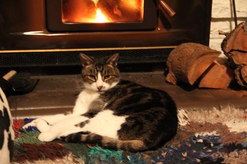 暖炉の前でくつろぐ猫