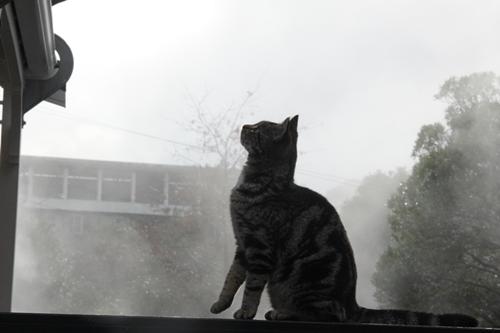 ファカレワレワ村の猫
