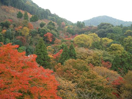 清水寺から見る紅葉