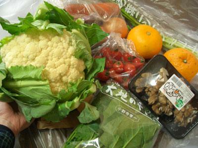 大地を守る会のお試し野菜が届きました。