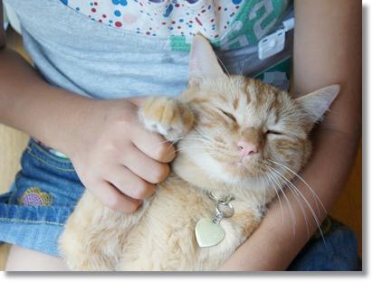 7月の猫(チャイ1歳)