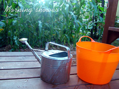 夏の水やりのポイント (家庭菜園・ガーデニング)