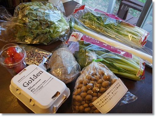 九州の農家から採れたてを直送!ベジタベルズおためし野菜セット 送料無料