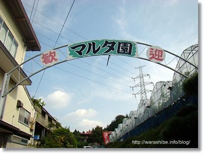 駒立ぶどう狩りなら愛知県岡崎駒立のマルタ園がおすすめ。大満足のぶどう狩り