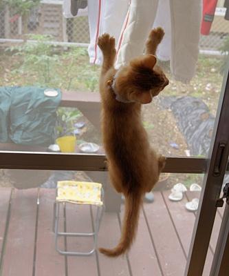 子猫との暮らしも十日を過ぎ・・・ (動画あり)
