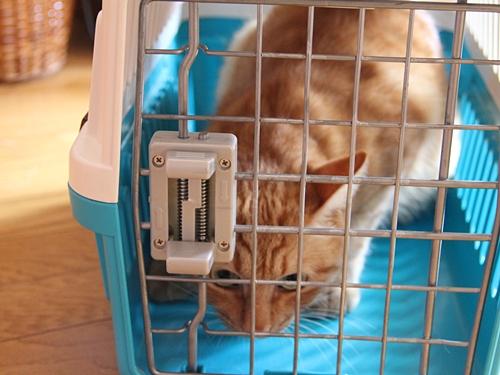 この夏、初めて飼い猫をペットホテルに預かってもらった話