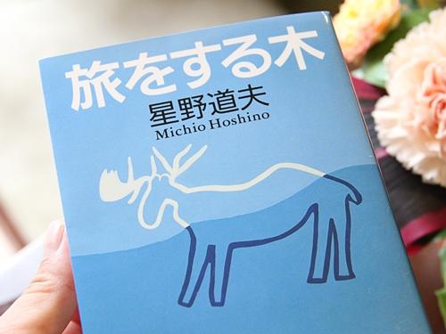 星野道夫さんの「旅をする木」を読んで、世界の広さ、自分の小ささを知る