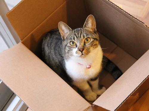 ロシア的猫を愛でる映画『こねこ(Котёнок)』 ネコ好きな方に観てほしい