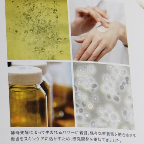 酵母発酵のエネルギー