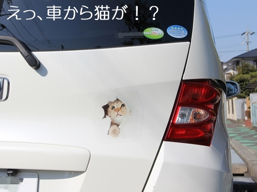 車を破って猫が顔を出す!? 壁破りが楽しい車ステッカーを貼ってみました♪