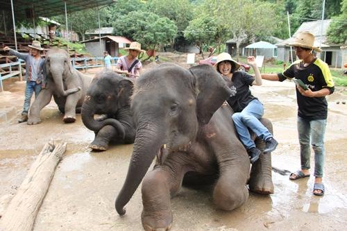 タイ・チェンマイの街角から、山から、象の背から切り取った風景