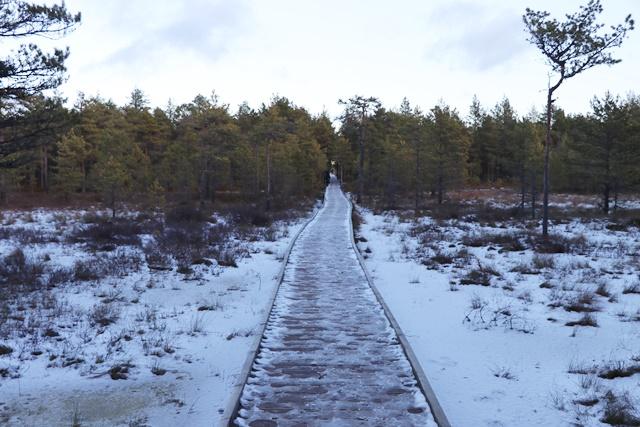 ラヘマー国立公園 ヴィル湿原 道
