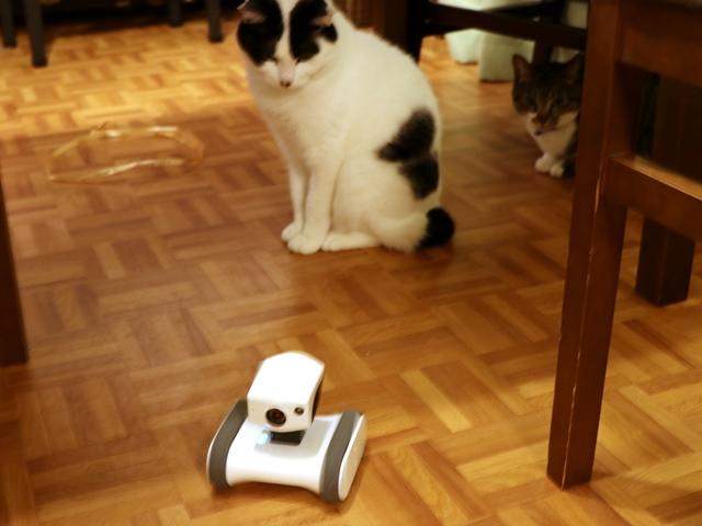 ロボットカメラ(Appbot Riley)で猫の様子を見る