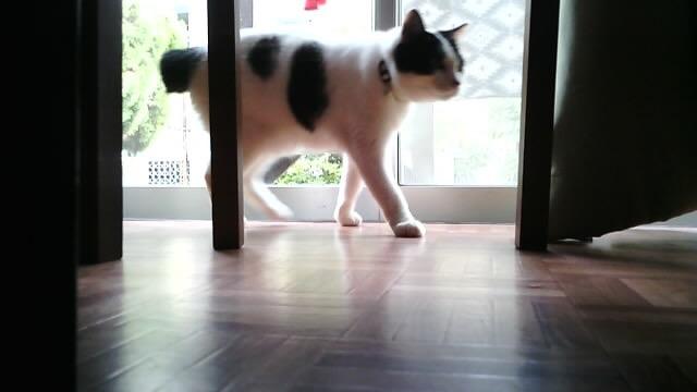 アボットライリーで撮影した猫の写真キャプチャ