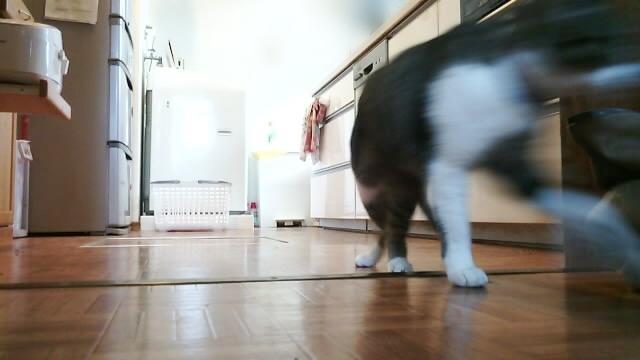 ライリーのカメラで見た留守中の家の様子