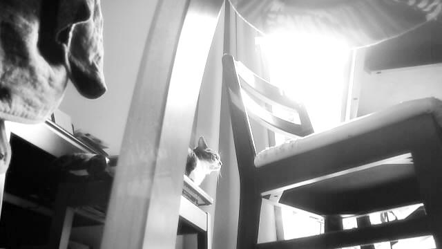 ライリーで記録した室内の様子キャプチャ画像