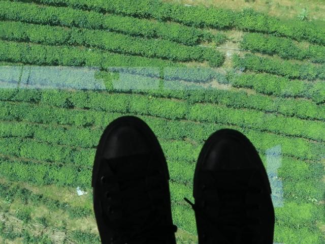 猫空ロープウェー・クリスタルキャビンからの景色