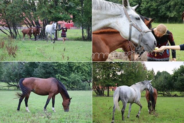 クラーラ・マンニ・ホリディ&カンファレンスセンターの敷地内で飼育されている馬