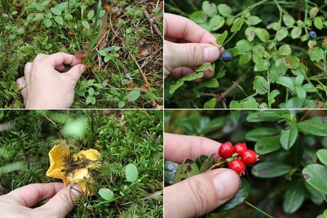 カリオラリゾートの森でベリー摘み&キノコ狩り