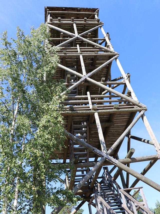 トルクセ湿原(Tolkuse bog)の展望台を下から見上げる
