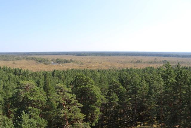 展望台から眺めるトルクセ湿原(Tolkuse bog)の風景