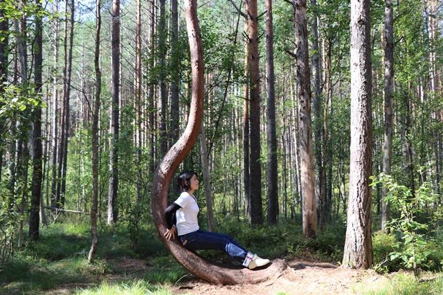 エストニア・トルクセ湿原(Tolkuse bog)の不思議な木