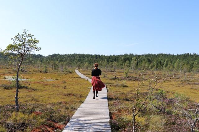 エストニア・トルクセ湿原(Tolkuse bog)のハイキング
