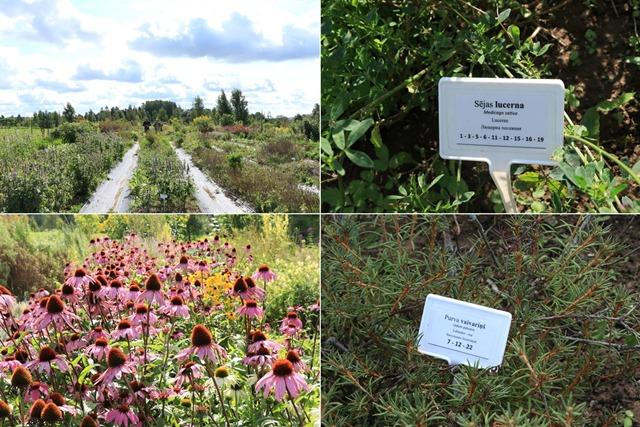 ラトビアのアヴアティニ薬用植物展示園