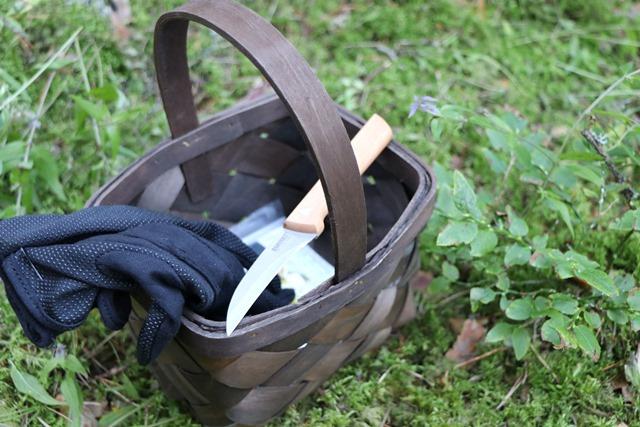 キノコ狩りの道具