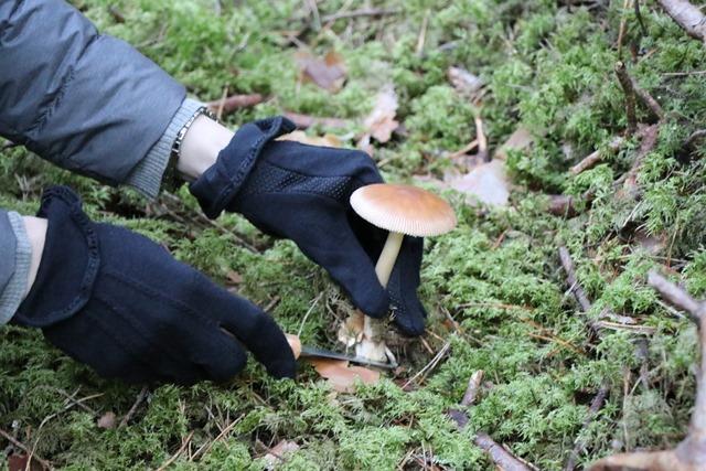 ラトビアの森でキノコ狩り