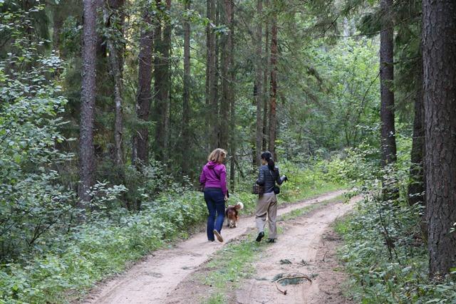 ガウヤ国立公園内の森できのこ狩り!