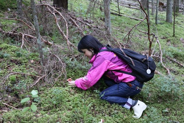 ガウヤ国立公園内の森できのこ狩り