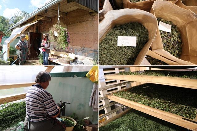 アヴアティニ薬用植物展示園
