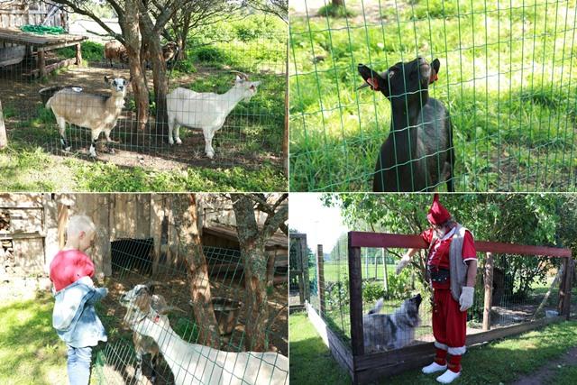 サンタの煙突村にいる動物たち