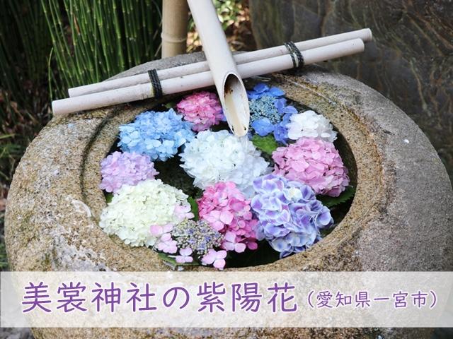 美裳神社(みもじんじゃ)の紫陽花@愛知県一宮市