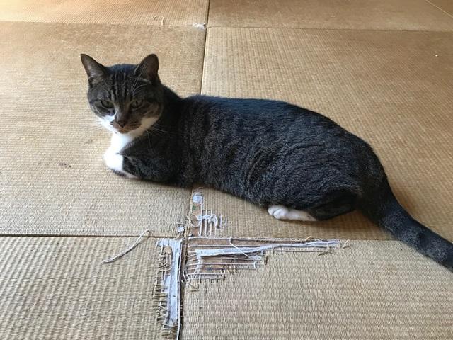 猫に爪とぎされた畳