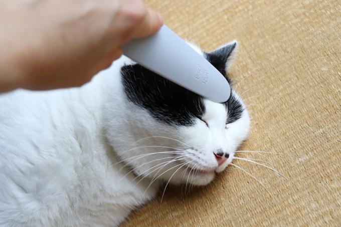 ねこじゃすりで撫でられる猫