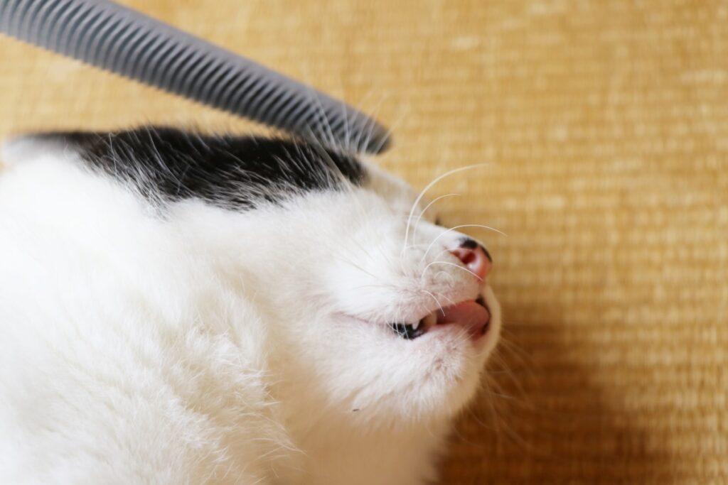 ねこじゃすりで脱力する猫