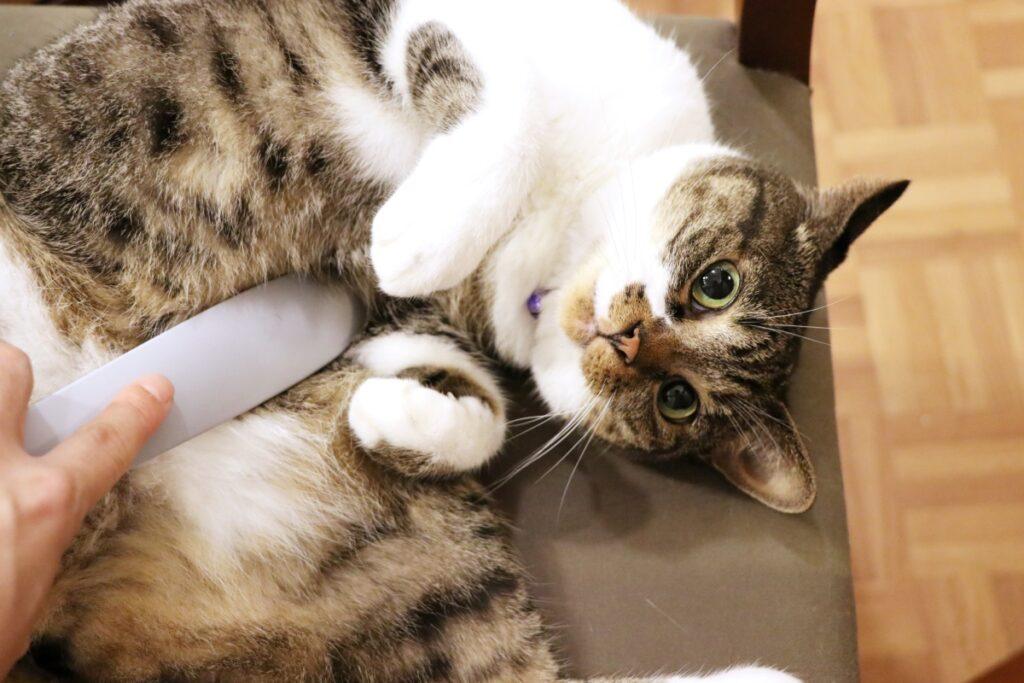気持ち良くて転がる猫