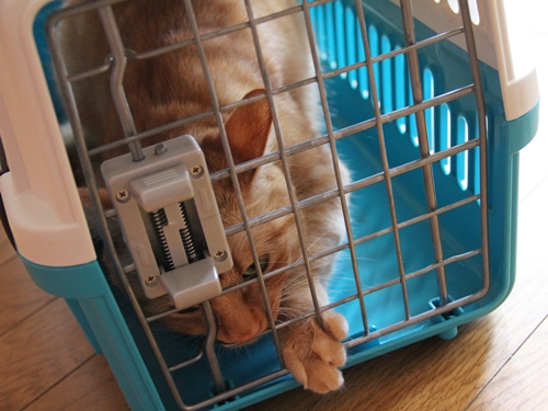 3泊4日以上の不在の場合、猫をどうするか?